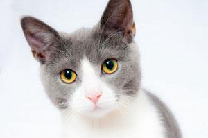 Natuurgeneeskunde voor katten