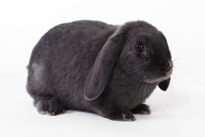 Natuurgeneeskunde van je konijn