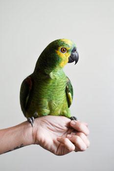Natuurgeneeskunde van de papagaai